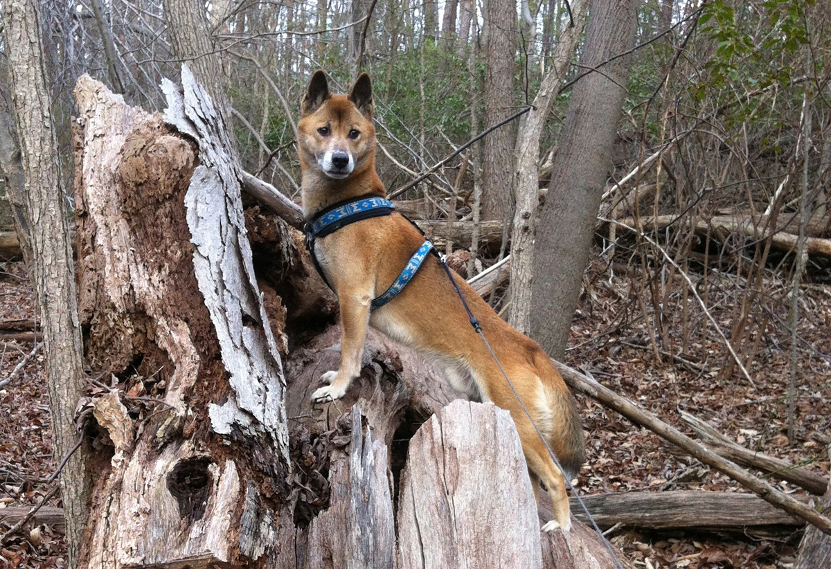 33 Exotic and unique dog breeds that you'd never come across at the local park.