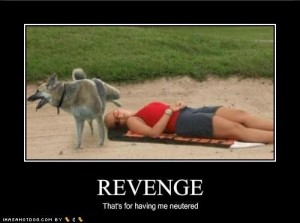 funny-dog-pictures-your-dog-is-having-his-revenge