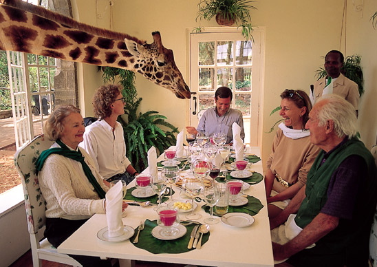 Travel: Giraffe Manor Hotel, Nairobi, Kenya - One of the Weirdest Hotel