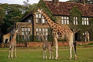 kenya-2-giraffe_manor_1