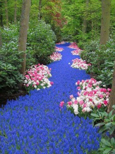 (X)COLOR4- Holland. River of Flowers, Keukenhof