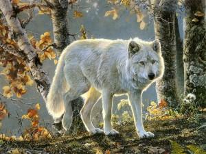 (X)(X)(X)beautiful-white-wolf-wolves-35765590