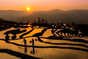 (X)breathtaking sights3-sunset over china rice field