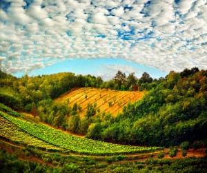 (X)color9-beautiful field of Serbia