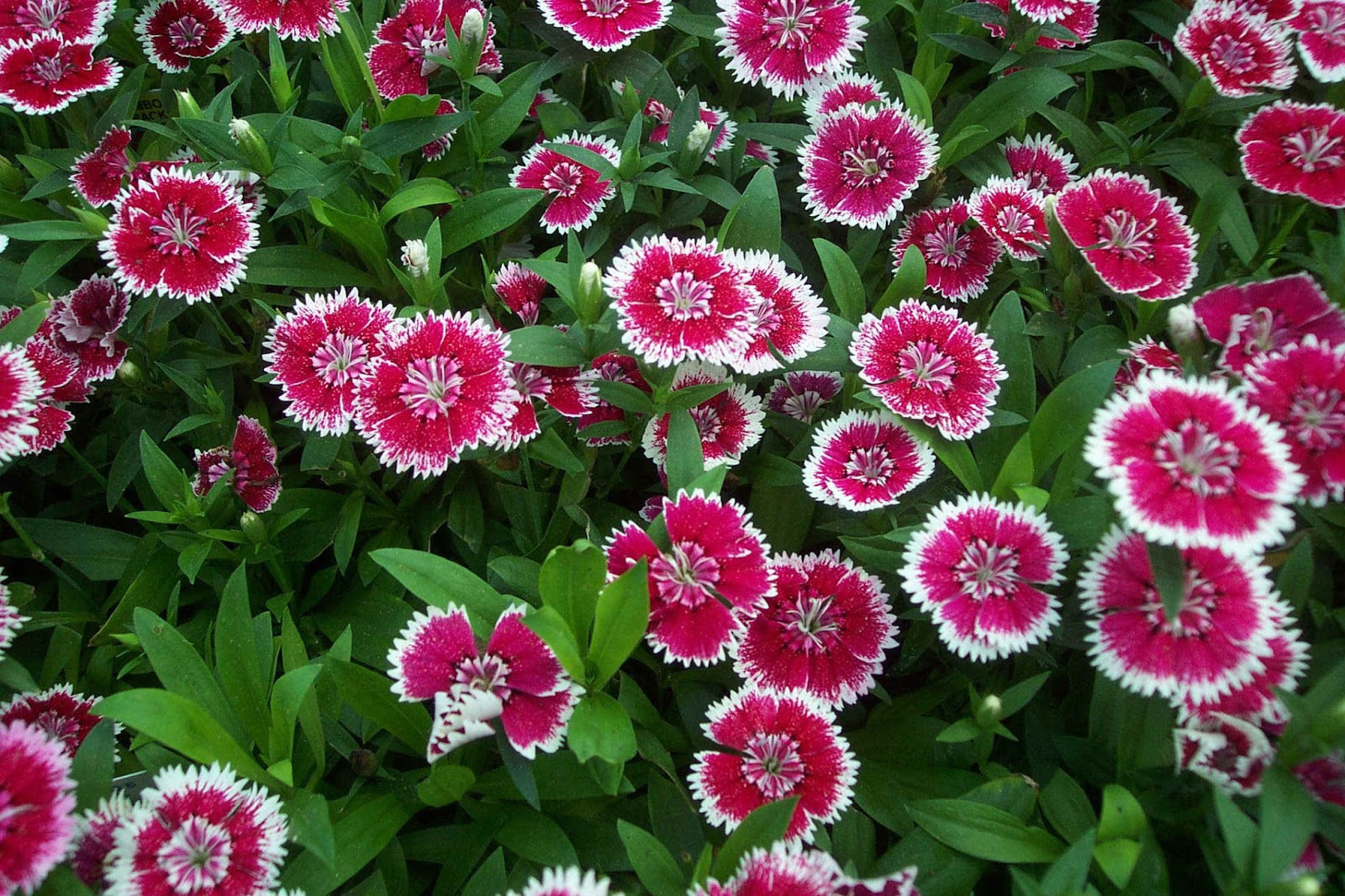 10 Most Cool and Beautiful Flowers In The World