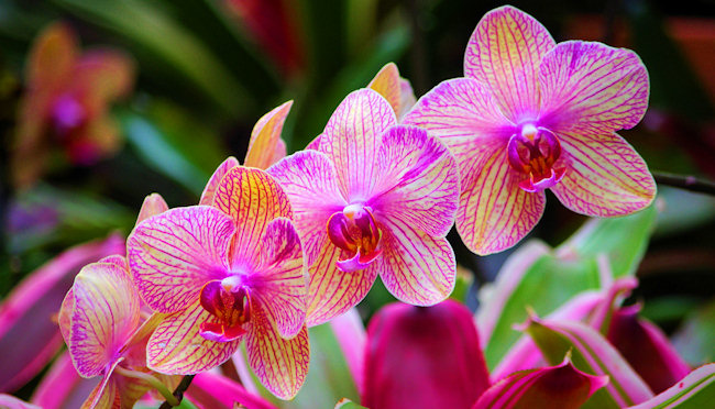 10 most cool and beautiful flowers in the world the genus name comes from the ancient greek rkhis literally meaning testicle because of the shape of the twin tubers in some species of orchis mightylinksfo