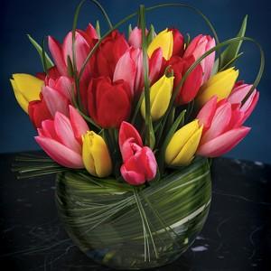 tulip-parkavefloratique_4