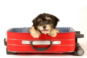 (x)travel-with-pets-1