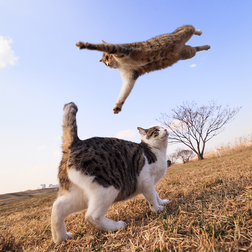 Fabulous Jumping Cats Will Make You Go 'Meow'