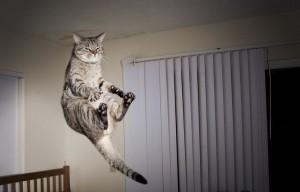 10-Jumping-Cat-21