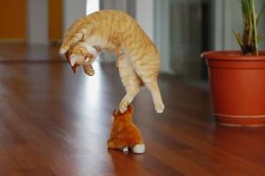 2-Jumping-Cat-14