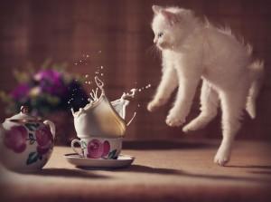 3-Jumping-Cat-1