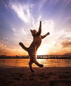 4-Jumping-Cat-7