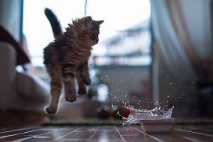 5-Jumping-Cat-2