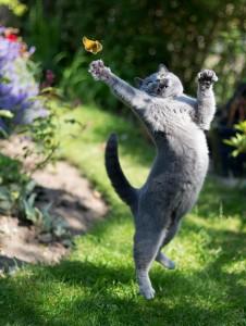 6-Jumping-Cat-4