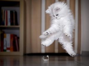 7-Jumping-Cat-8