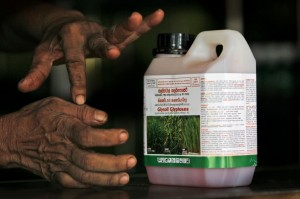 In this July 24, 2014, photo, a Sri Lankan agrochemical vendor gives instructions on how to use Glyphosate, the country's most popular weed killer, at a chemical sales point in Padaviya, Sri Lanka. A chronic kidney disease that has already killed up to 20,000 people over the past two decades and affects anywhere from 70,000 to 400,000 more in the country's North Central rice basket, remains an enigma without a name. Many in Sri Lanka, including the World Health Organization, have pointed to heavy use and misuse of agrochemicals as a possible culprit in a country that's among the world's top fertilizer users. (AP Photo/Eranga Jayawardena)