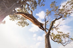 8-Jumping-Cat-11
