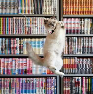9-Jumping-Cat-20