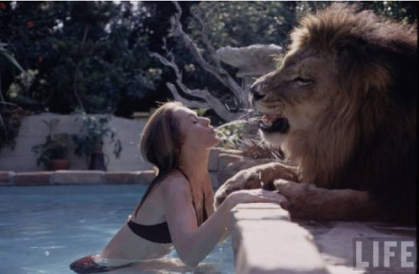 Something Wild Photostory:At Home With Tippi Hedren, Melanie Griffith and Neil, a 400-Pound Lion