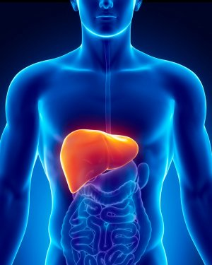 Fatty Liver: Symptoms, Causes and Treatment