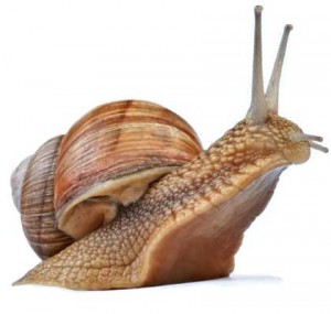 snail-front