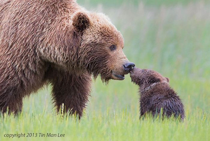 Adorable:  Parenting in the Wild