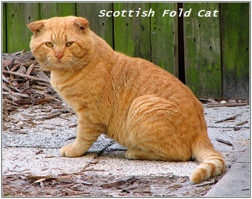 15 Beautiful Cat Breeds