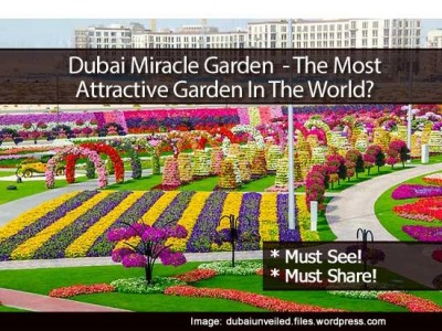 Dubai Miracle Garden has the record in Guinness Book of Records for having the longest wall of flowers.