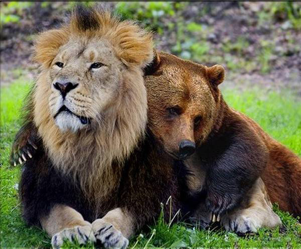 15 Amazing Animal Friendship