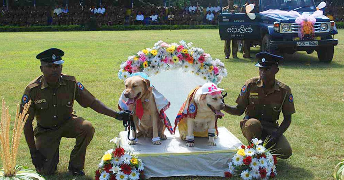 Wedding ceremony for police dogs, including 'honeymoons,' sparks outrage