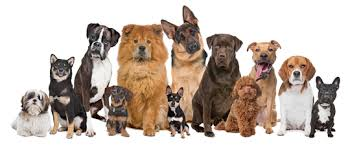 Do You Know Your Pet Dog Breeds?