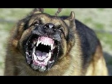 10 Kinds of World's Most Dangerous Dogs