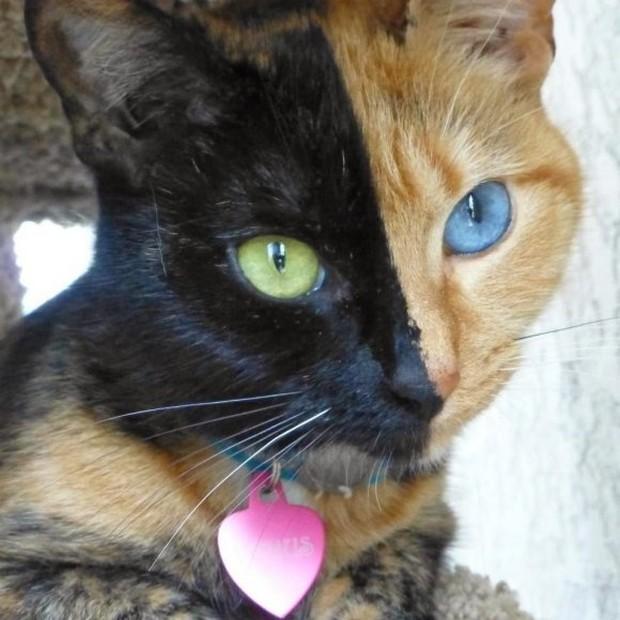 Heterochromia Iridum: Two Different Colored Eyes (21 photos)