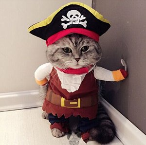 Pirate cat! Pirates of the Caribbean costume