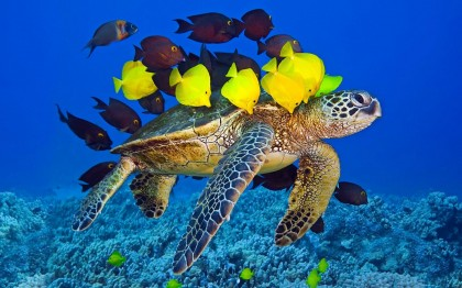 14 Ocean Quotes and 138 Most Amazing Underwater Photos