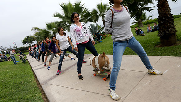 Otto the skateboarding bulldog – Guinness World Records