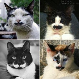 Different Faces of Cat PHOTOS