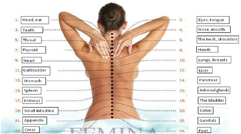 How The Spine Causes Pain To Your Internal Organs