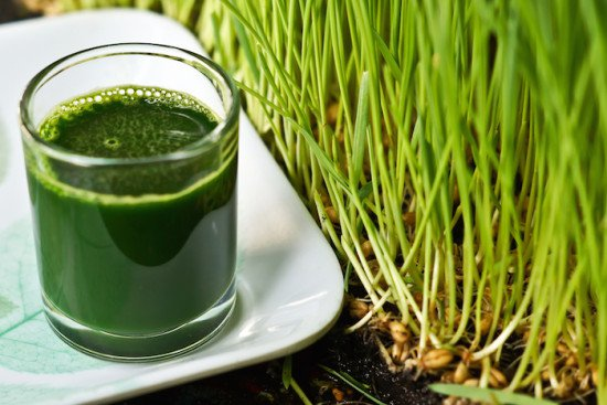 Health: Health Benefits Of Wheatgrass, Facts and Myth