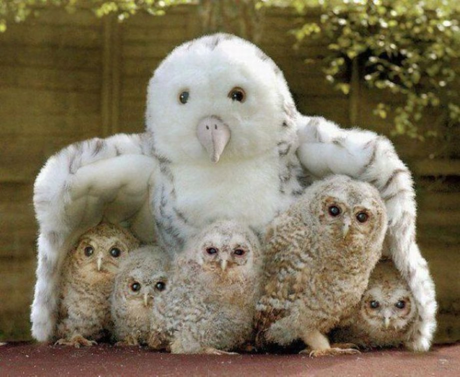 Photograph: Owl Obsession