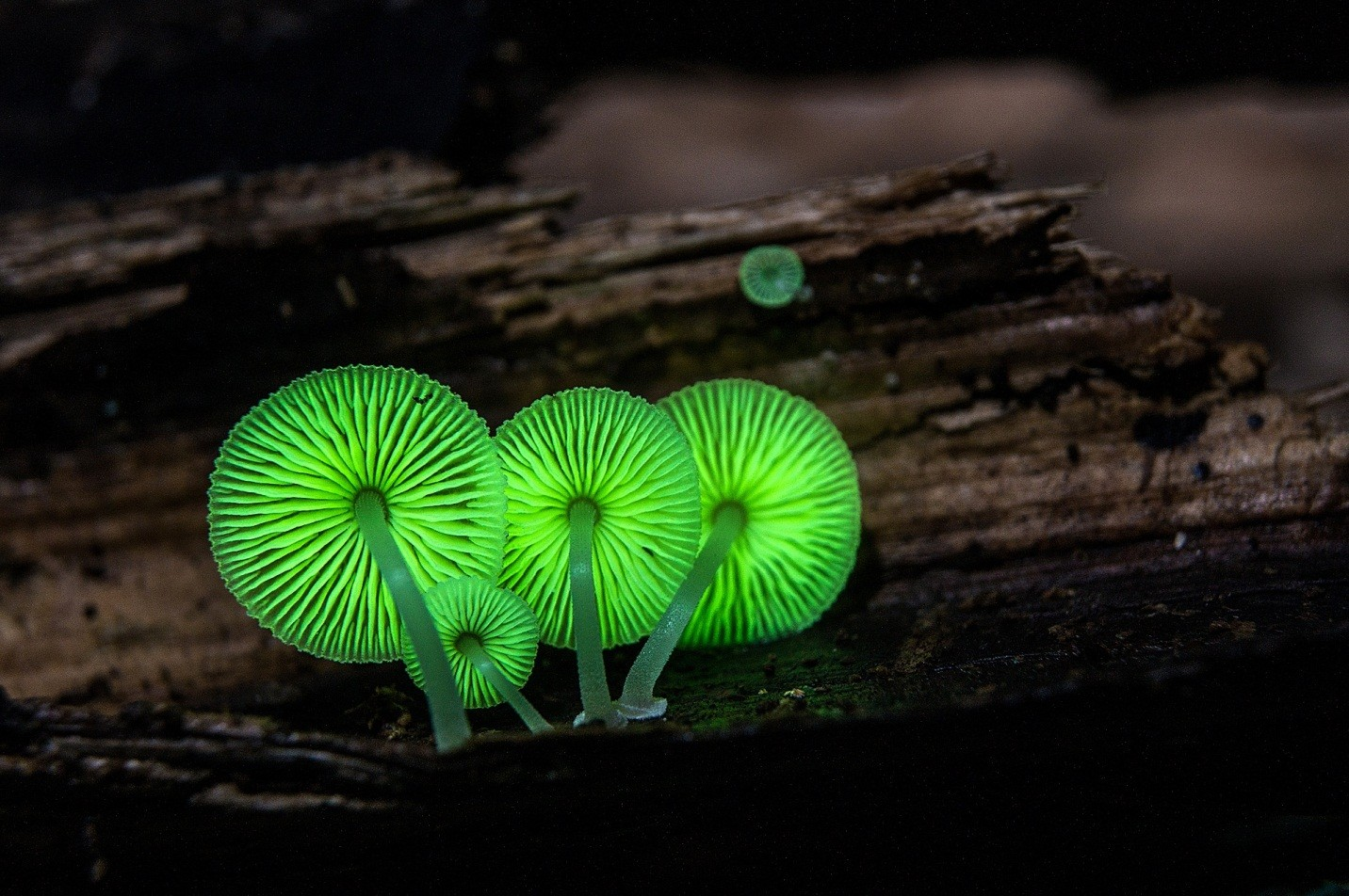 Photography: What Make These Mushrooms Stunning?