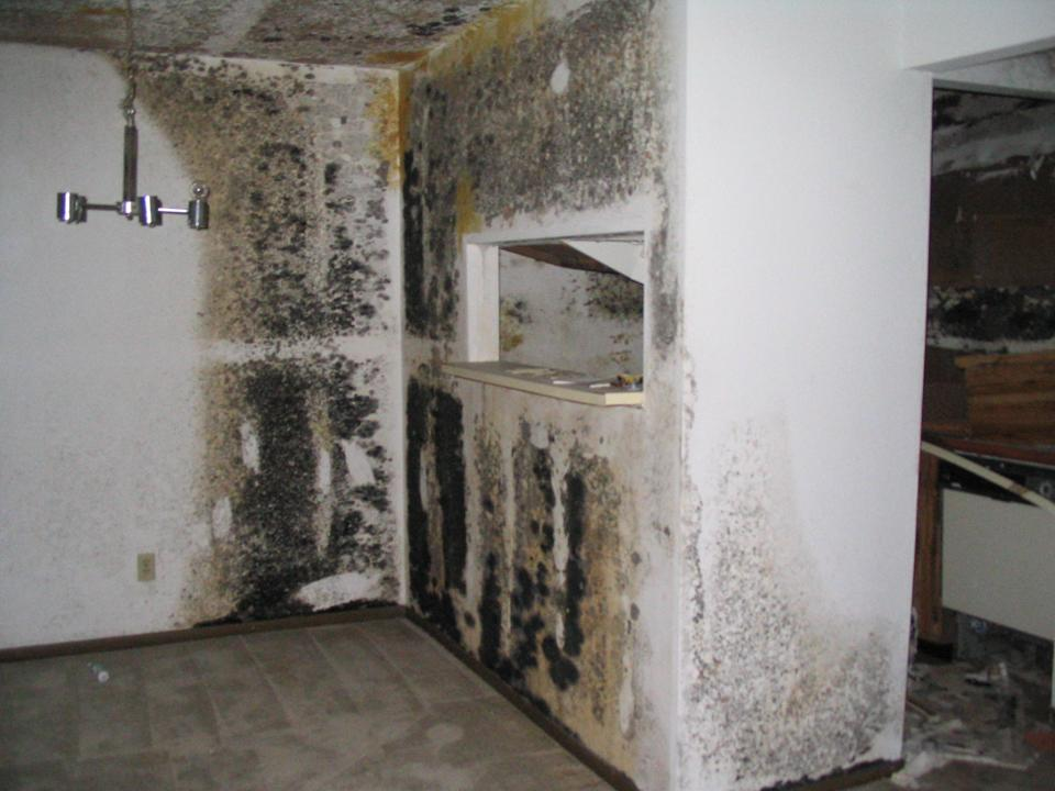 HEALTH: Black Toxic Mold, Its Symptoms, Prevention, And Removal