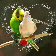 PHOTOGRAPHY: They Are Love Birds
