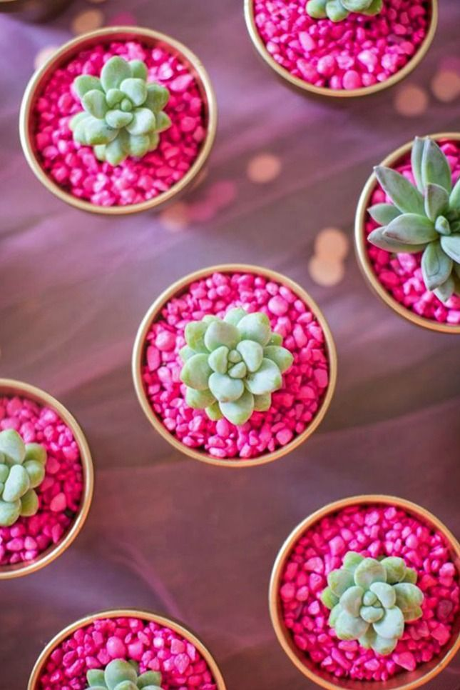 NATURE: The Beauty of Succulent Flowers (2)