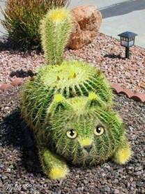 NATURE: Beauty of Cactus Plants