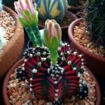 fd474f1eeb7c4ee24c12c96d782f7e98--garden-gifts-dream-garden