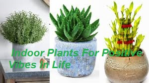 NATURE:  Indoor Plants For Positive Vibes In Life