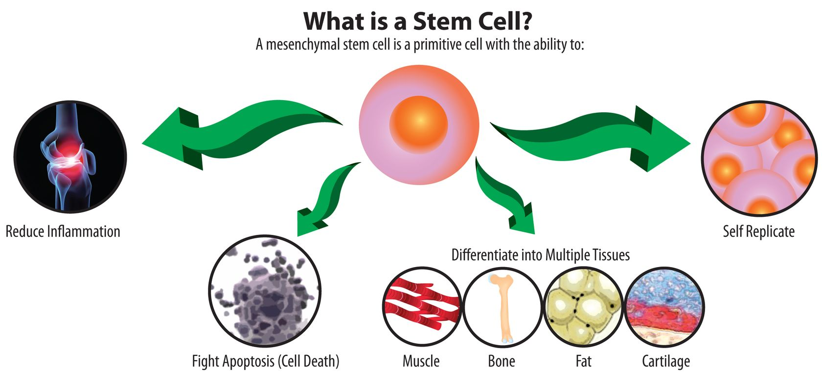 HEALTH EDUCATION:  Stem Cells and Plant Stem Cells