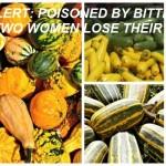 Cucurbit-Vegetables